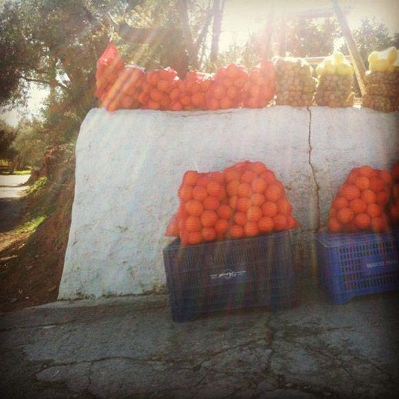 Naranjas de Órgiva