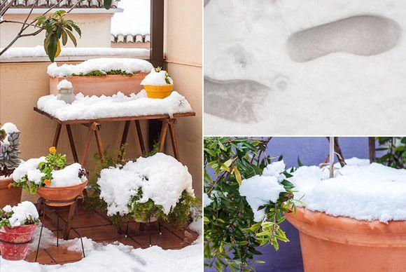 Plantas con nieve