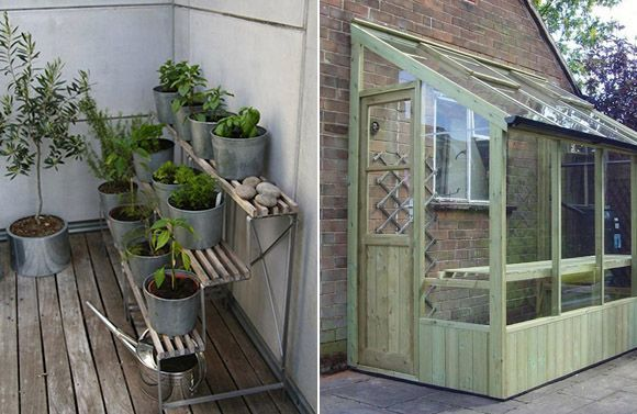 Invernadero y plantas