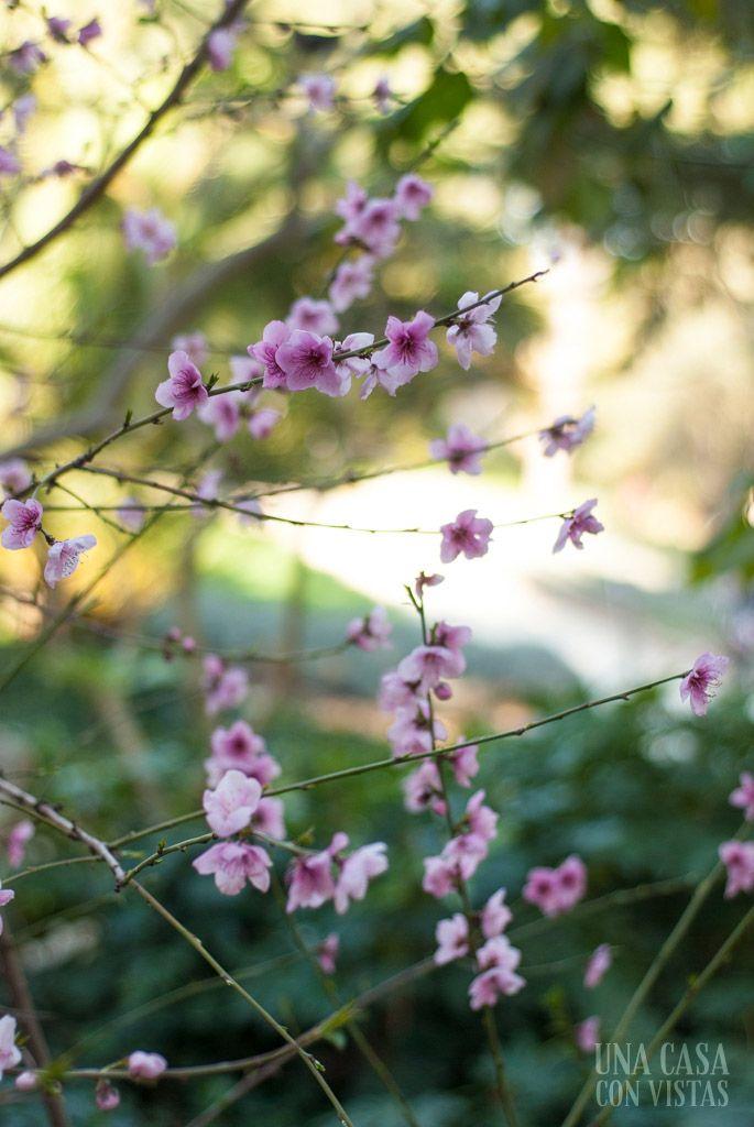 Árbol con flores moradas