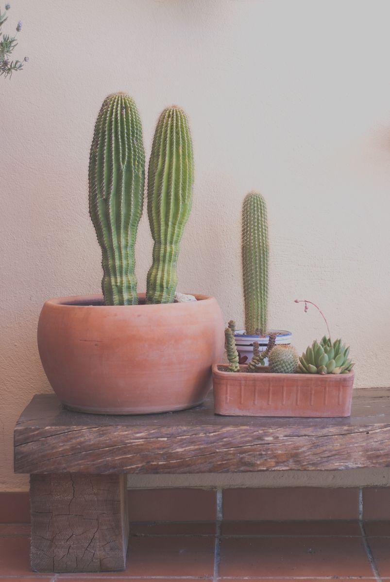 Cactus sobre banco