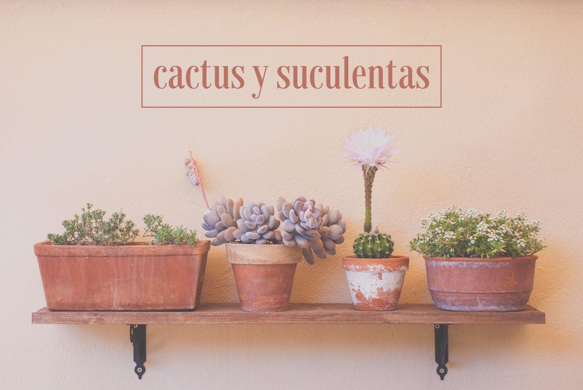 Estantería con cactus y suculentas