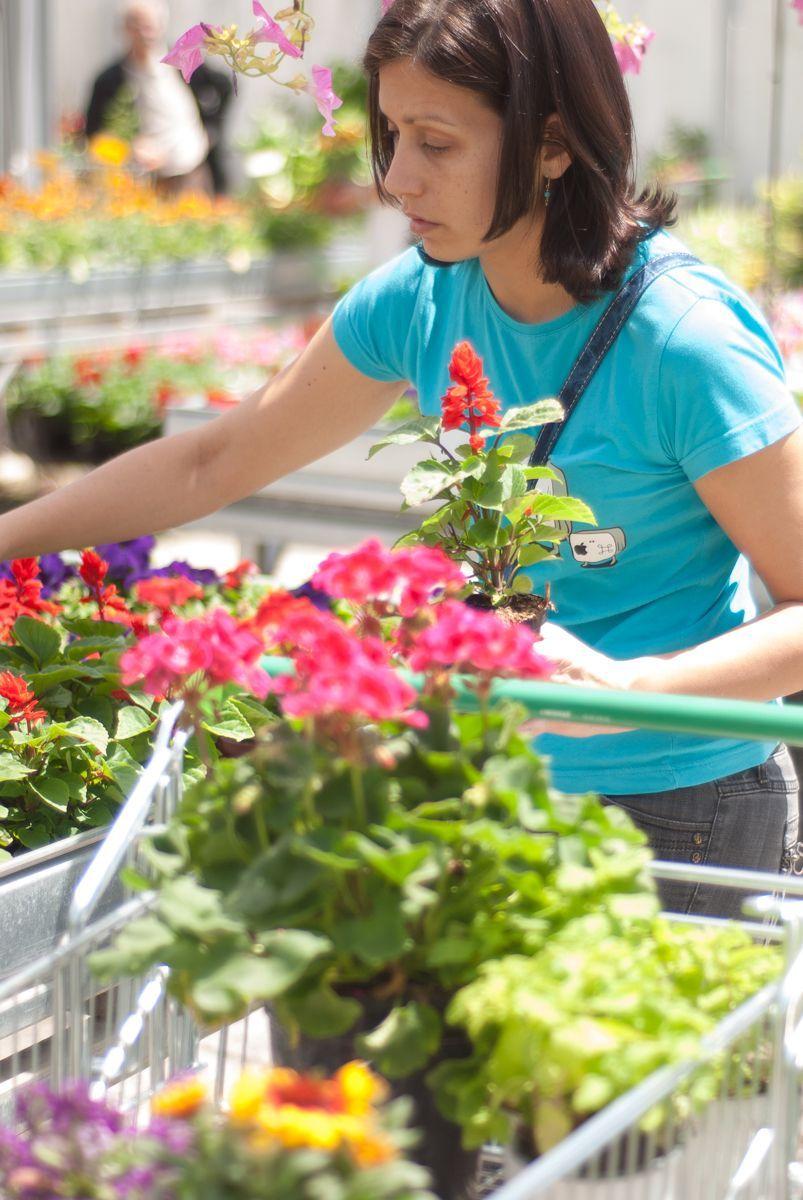 Comprando plantas en el vivero