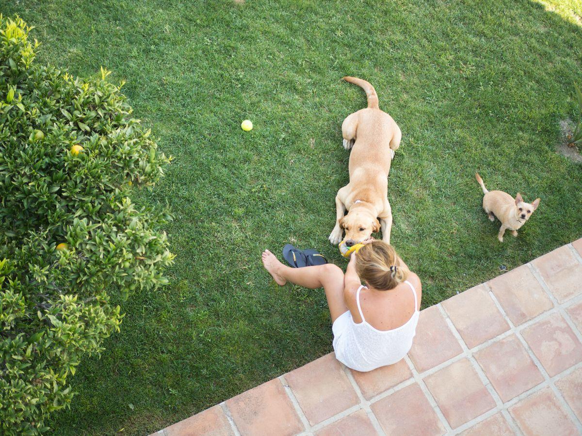 Jugando con las perras