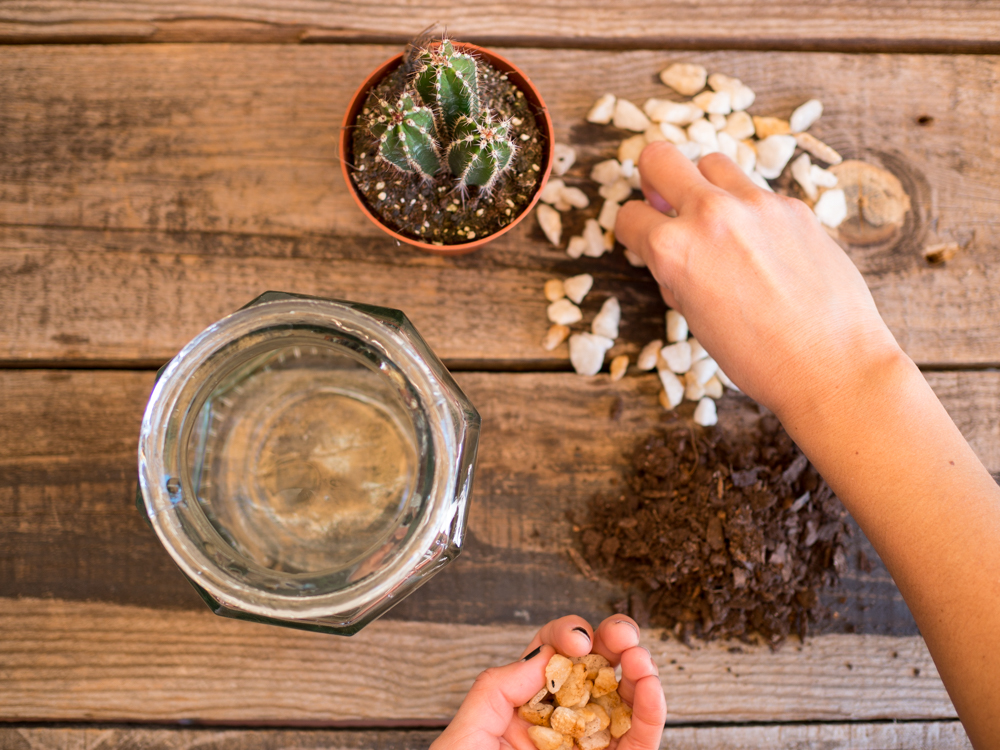 Cactus en bote de cristal