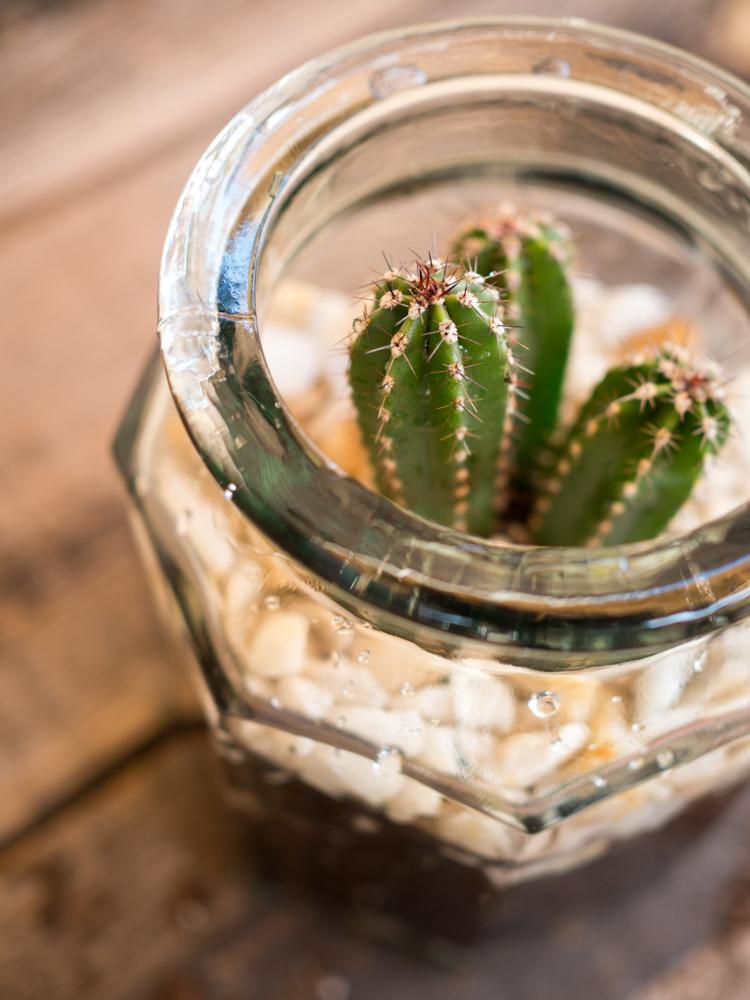 Como plantar cactus en macetas casa dise o for Como plantar cactus