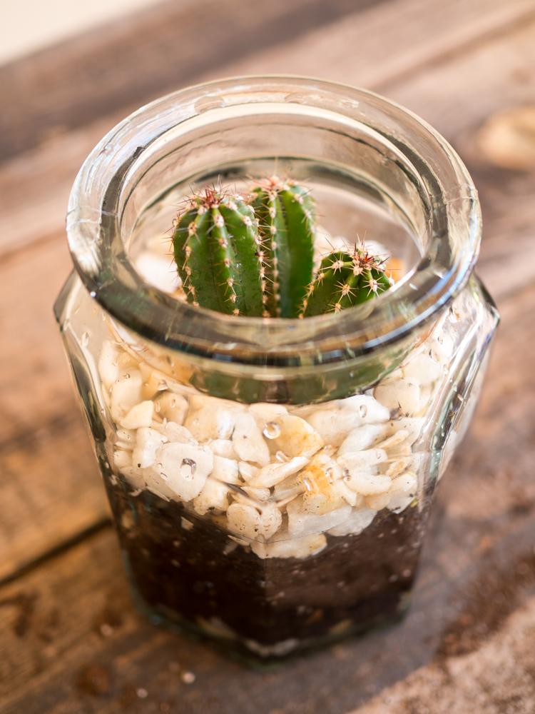Plantar cactus en bote de cristal una casa con vistas for Como plantar cactus