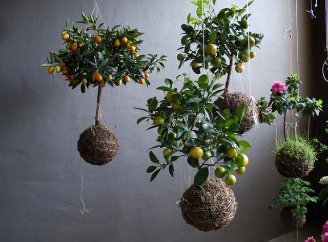 tipo de planta a la decoración de casa, y darle un toque de color de