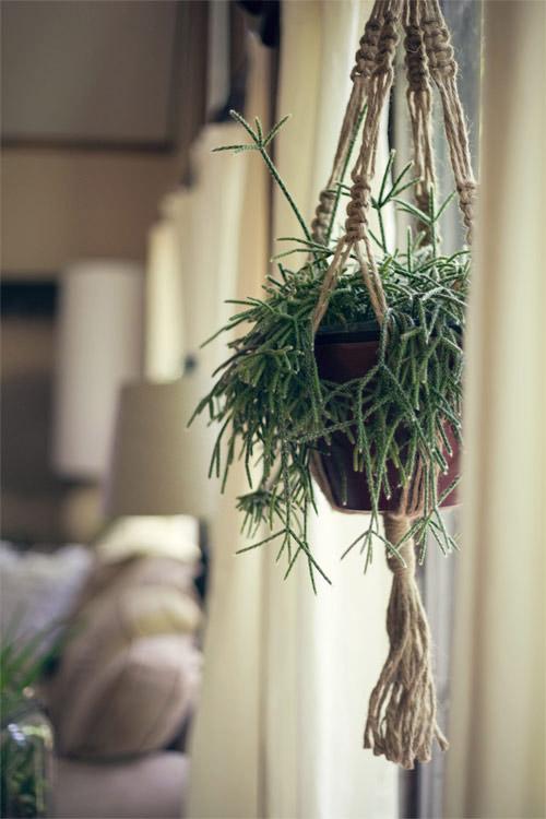 Plantas colgantes macrame para decorar
