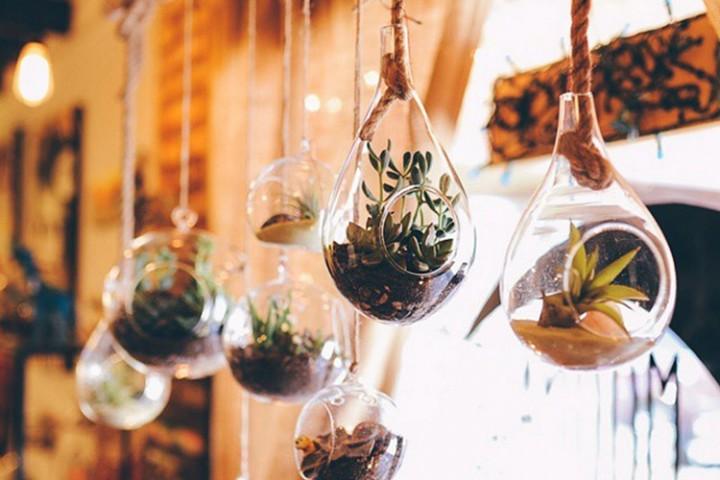 Plantas colgantes para decorar