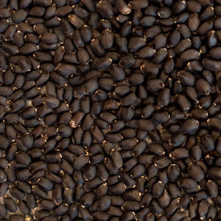 Semillas de albahaca