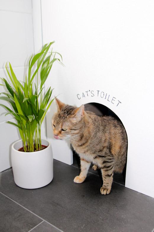 Entrada especial para el gato