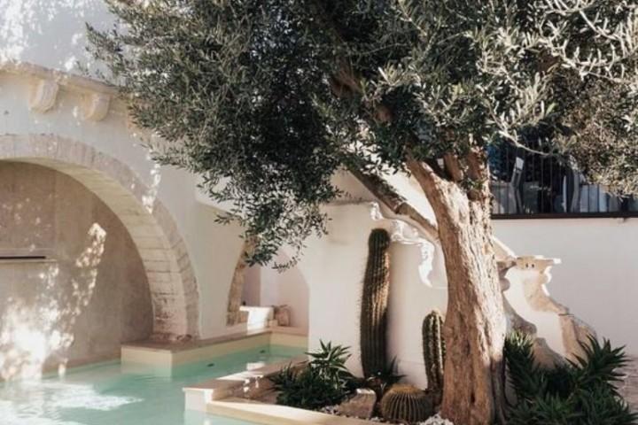Pequeña piscina con olivo
