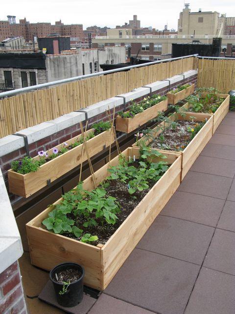 Huerto urbano en terraza