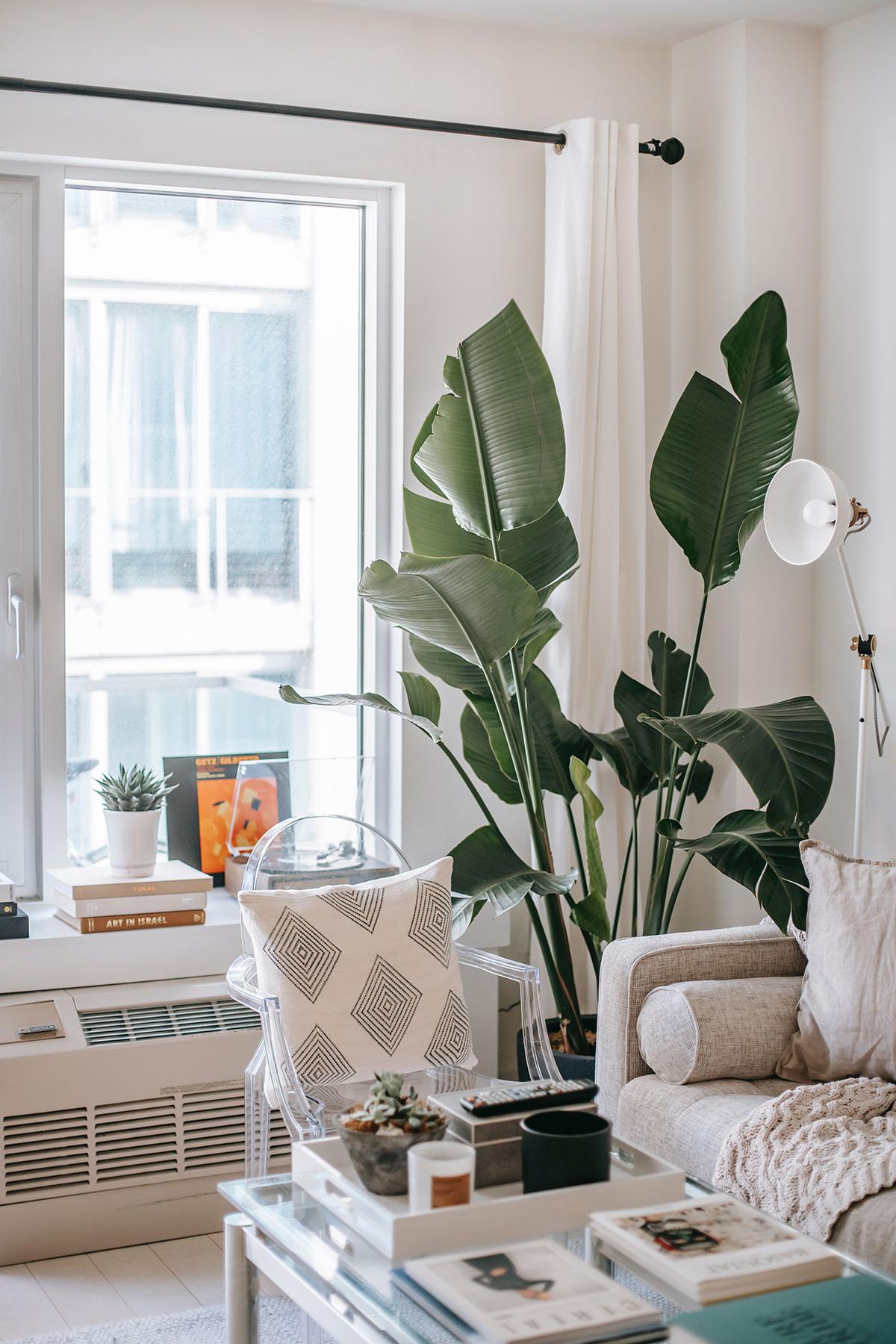 Salón luminoso con plantas
